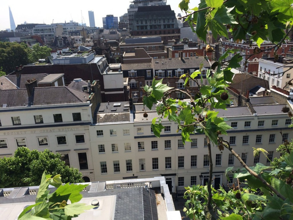 View from London Plane in Russell Square