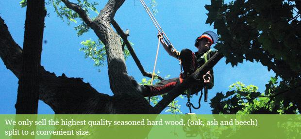 Tree surgeon up a tree, on ropes.